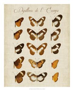 Papillons de L'Europe IV by Vision Studio