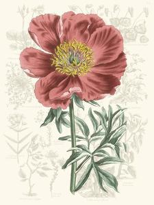 Peony Flower Garden IV by Vision Studio