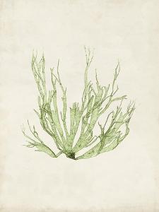 Peridot Seaweed IV by Vision Studio