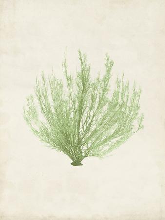Peridot Seaweed VI