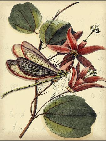 Petite Dragonflies III