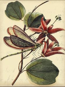 Petite Dragonflies III by Vision Studio