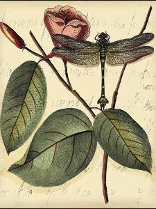 Petite Dragonflies IV by Vision Studio