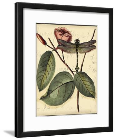Petite Dragonflies IV