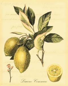 Petite Tuscan Fruits II by Vision Studio