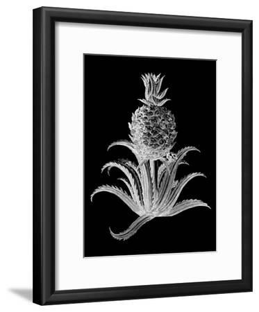 Pineapple Noir II
