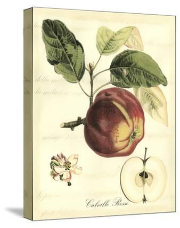 Printed Tuscan Fruits I