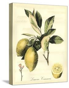 Printed Tuscan Fruits II by Vision Studio