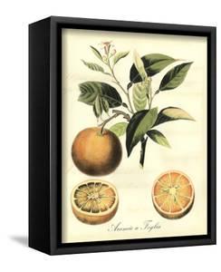 Printed Tuscan Fruits III by Vision Studio