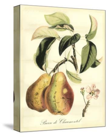 Printed Tuscan Fruits IV