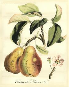 Printed Tuscan Fruits IV by Vision Studio