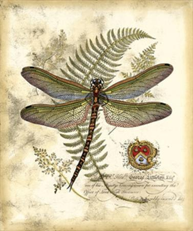 Regal Dragonfly I by Vision Studio
