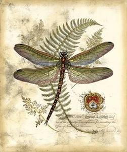 Beautiful Dragonfly Artwork For Sale Posters And Prints