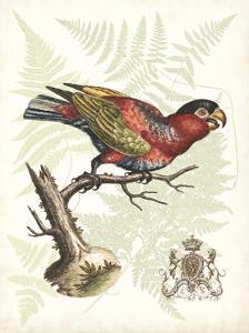 Regal Parrots I by Vision Studio