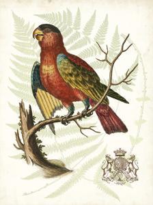 Regal Parrots II by Vision Studio