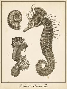 Seahorse Study II by Vision Studio