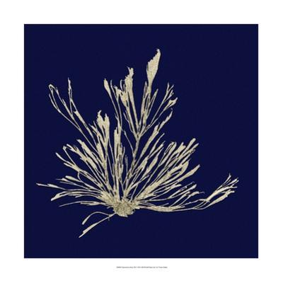 Seaweed on Navy III