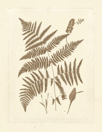 Sepia Ferns I by Vision Studio