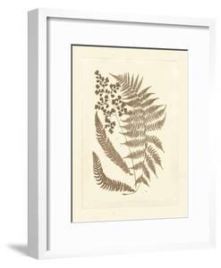 Sepia Ferns III by Vision Studio