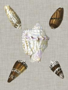 Shells on Linen II by Vision Studio