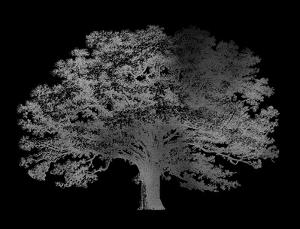 Silver Foil Elephant Tree on Black by Vision Studio