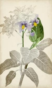 Silvery Botanicals IX by Vision Studio