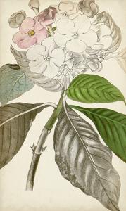 Silvery Botanicals V by Vision Studio