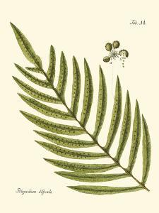 Small Antique Fern I by Vision Studio
