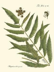 Small Antique Fern II by Vision Studio