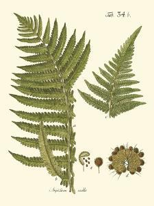 Small Antique Fern III by Vision Studio