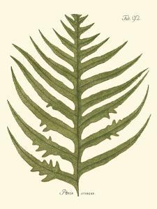 Small Antique Fern VIII by Vision Studio