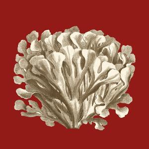Small Coral on Red III by Vision Studio
