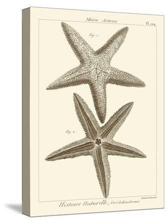 Striking Starfish I