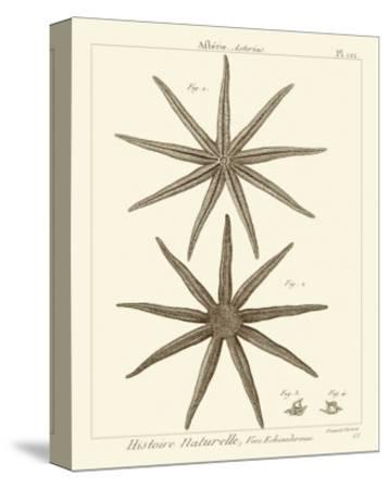 Striking Starfish III