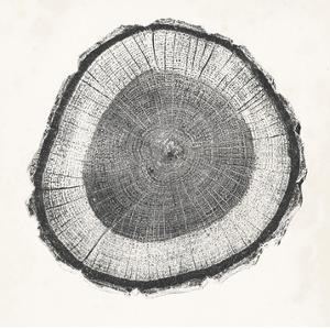 Tree Ring II by Vision Studio