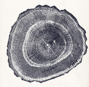 Tree Ring III by Vision Studio