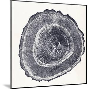 Tree Ring III by Vision Studio