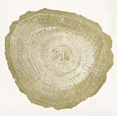 Tree Ring IV by Vision Studio