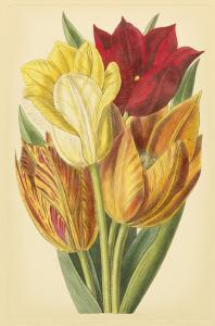 Tulip Array II by Vision Studio