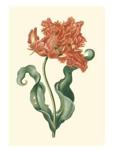 Tulipa VI by Vision Studio