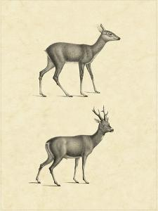 Vintage Deer I by Vision Studio