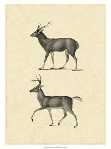 Vintage Deer II by Vision Studio