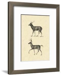 Vintage Deer II by Vision Studio