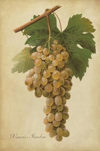 Vintage Vines II by Vision Studio