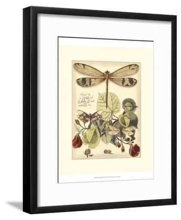 Whimsical Dragonflies II