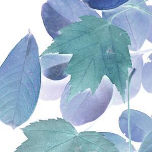 Xray Leaves III by Vision Studio