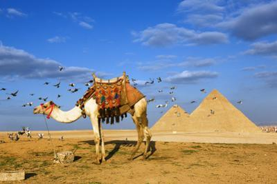Egyptian Pyramids by Visions Of Our Land