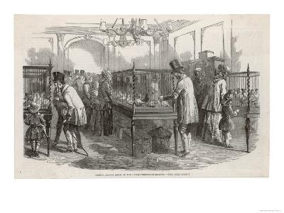 Visitors at the Philo- Peristeron Society's Annual Pigeon Show London--Giclee Print
