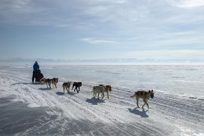 Visitors Enjoying Dog Sledding-Louise Murray-Photographic Print