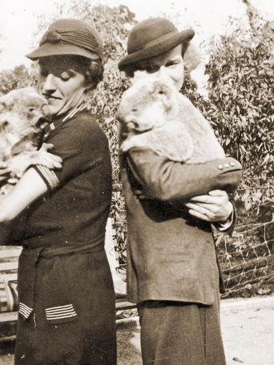Visitors Holding Koalas at Taronga Zoo, Sydney, Australia. 1932--Photographic Print